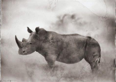 Perangko Taiwan Endangered Mammals Postage Sts Pictorial est100 一些攝影 some photos africa s most endangered species 非洲最瀕危的物種