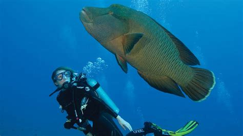 maldives dive diving baa atoll raa atoll maldives four seasons
