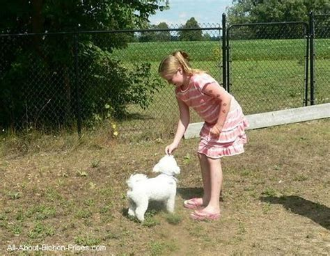 basic obedience how to a puppy all about bichon frises