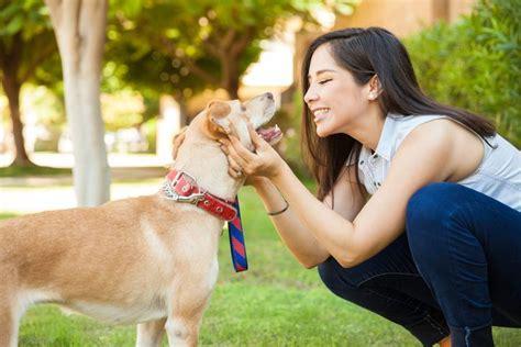 mujer se pega con su mascota hablar con tu mascota es sin 243 nimo de inteligencia