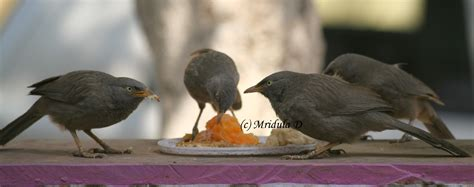 lazy sunday photo a feast for the birds travel tales