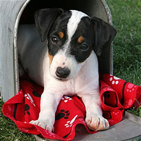 why do dogs bark at the mailman 13 cat and behaviors explained grandparents