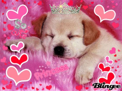 princess puppy puppy princess picture 83783551 blingee
