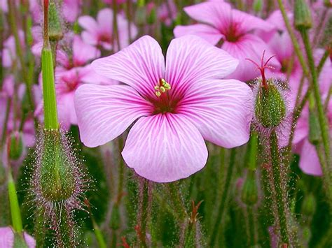 free flower images and stock photos free stock photo in high resolution pink flower 2 flowers