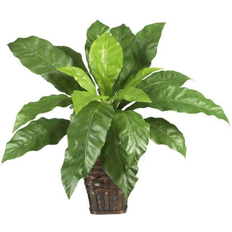 silk plants 22 inch bird s nest fern in wicker basket 6530