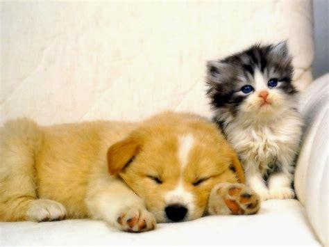 imagenes tiernas xd gatos bebes bonitos y tiernos amarillos