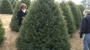 cut down your own tree in md nj farms where you can cut your own tree 2013 njtv news