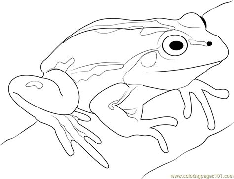 jumping frog coloring page cartoon frogs pictures jumping frog coloring pages