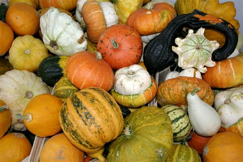 photos pumpkins file pumpkins jpg