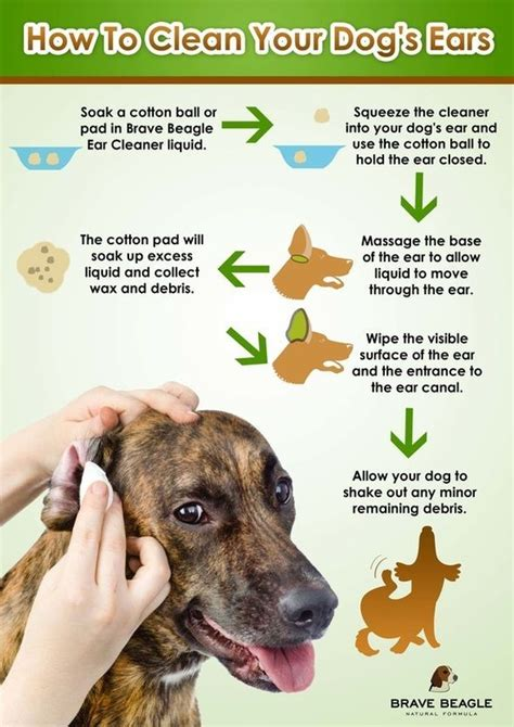 Homeopathic Detox For Dogs by Best 25 Ear Cleaner Ideas On Ear