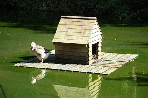 How To Build A Duck House duck house 169 richard geograph britain and ireland