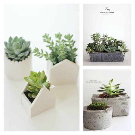 Diy Macrame Hanging Planter by Diy Air Plants Amp Succulents Diy Roundup Very Shannon