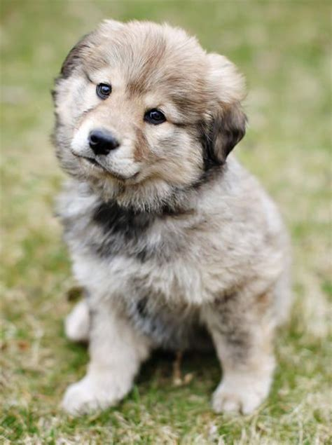 Mixed Breed Puppies Sale And Beautiful On