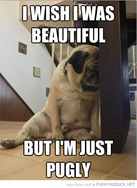 Depressed Pug Meme - dog quote cartoons funny images gallery