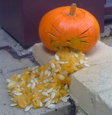 pumpkin sick 25 pumpkins vomiting holytaco