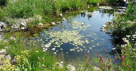 water garden or backyard pond pond building