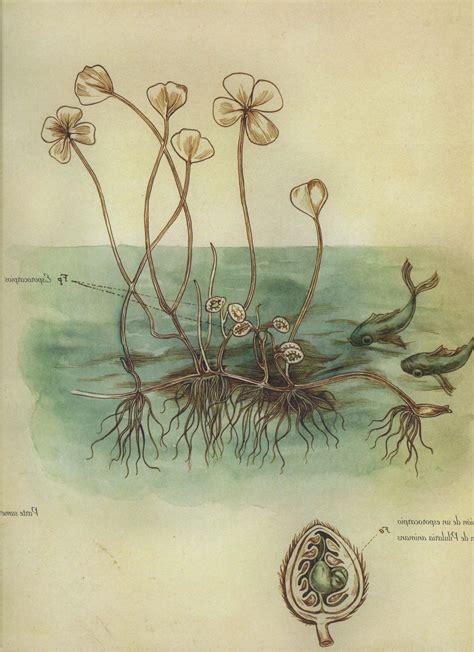 descargar pdf el herbario de las hadas the herbarium of the fairies libro el herbario de las hadas ilustraciones de benjamin lacombe arte