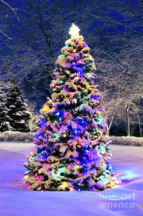snowball lights for christmas tree tree in snow amazing world tree snow and beautiful