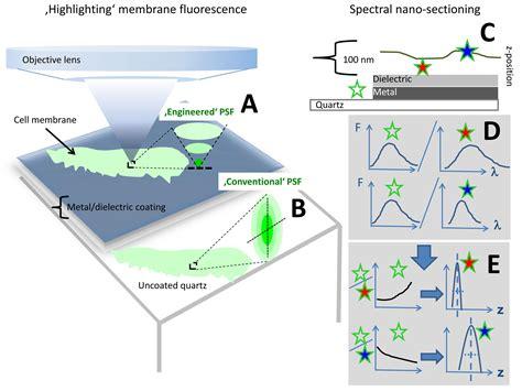 membrane protein localization  specon imaging