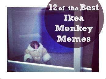Ikea Meme - ikea monkey meme cat image memes at relatably com