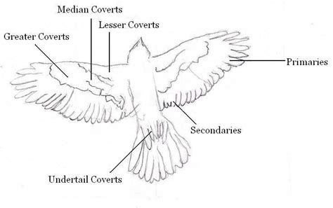 Parts Of A Feather Diagram