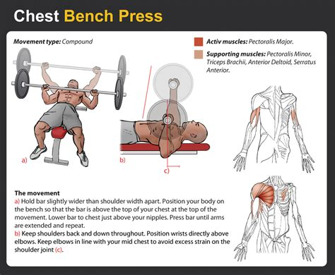 bench press benefits benefits of bench press 28 images the bench press