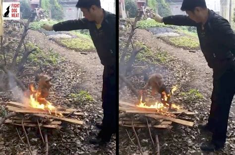 china puppy burned alive  dog meat fight dog meat