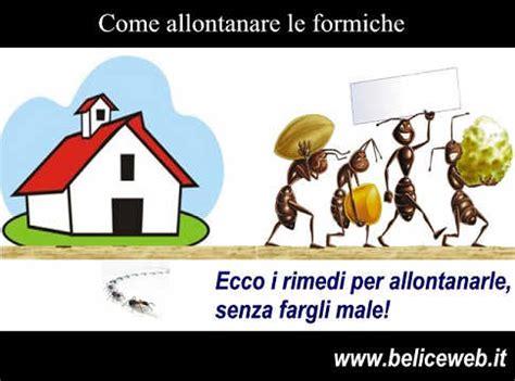 Allontanare Le Formiche Da Casa by Formiche Come Faccio Ad Allontanare Le Formiche Da Casa