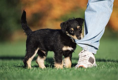 when do puppies stop biting puppy biting how to stop it from becoming a serious problem urdogs