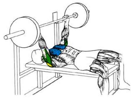 bench press muscles liftrite video guide the bench press