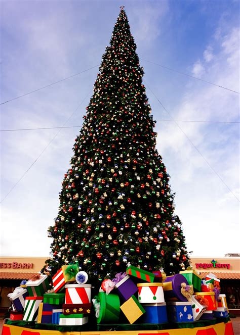 fresh cut christmas tree kingman az arizona s largest tree arrives at the outlets at anthem morning arizona
