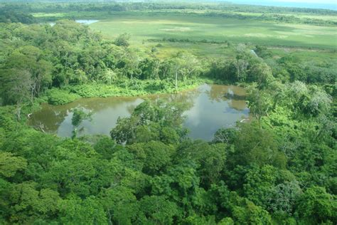 the best jungle jungle vacations in belize the best resorts the travel
