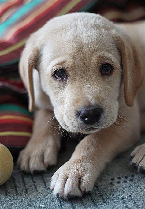 sweet puppy sweet puppy animals