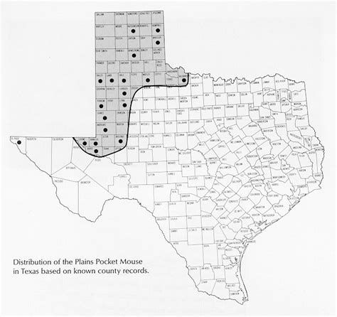 texas high plains map plains pocket mouse perognathus flavescens