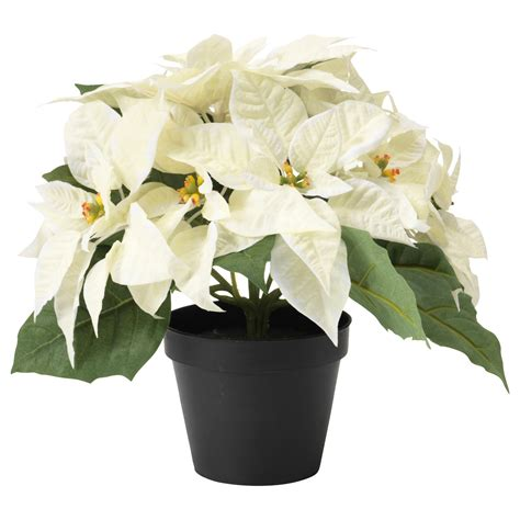 fejka artificial potted plant poinsettia white 12 cm ikea