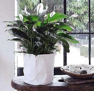 images  plantas  flores  pinterest