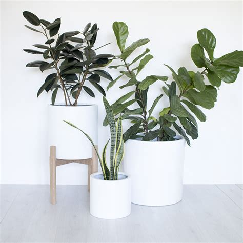 indoor planters planters astounding indoor tree planter indoor flower pot