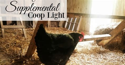 Chicken Lit No Really by The Against Adding Supplemental Winter Chicken Coop