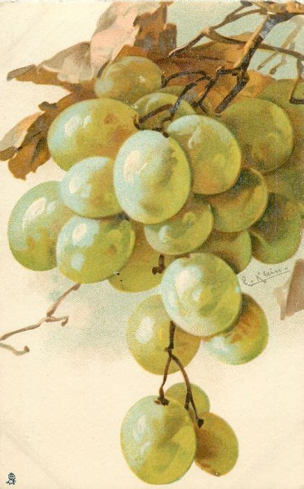If Were Apples And Were Grapes by 209 Best Images About Grapes On Vitis Vinifera