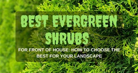 bushes for front of house best evergreen shrubs for front of house how to choose