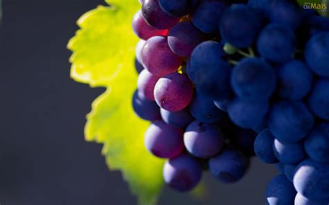 imagenes hd uvas osmais com papel de parede cacho de uvas papel de