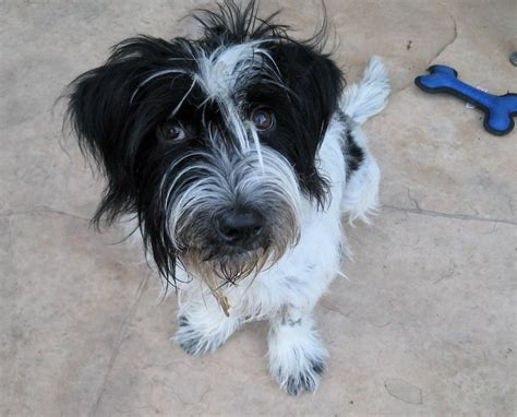 shaggy rescue looking for a shaggy to adopt try houston s shaggy rescue houston