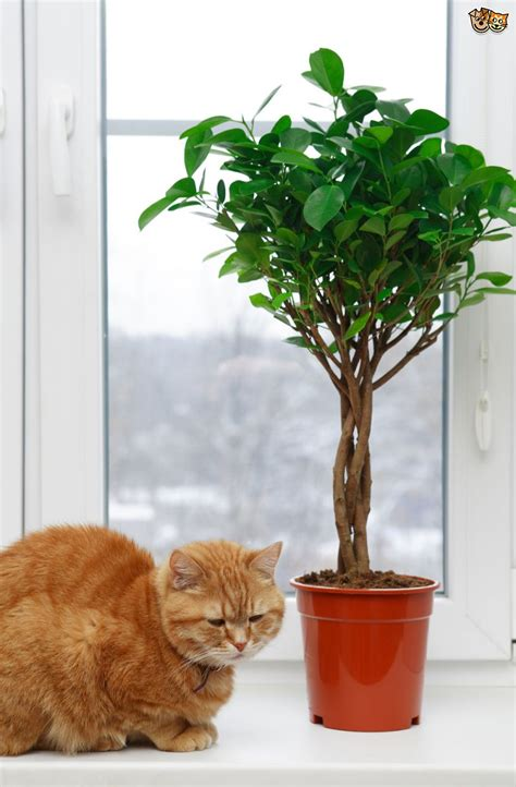 indoor plants for cats 5 common houseplants and flowers that are most toxic to
