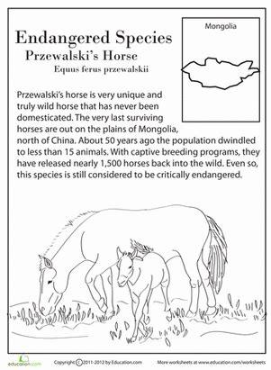 printable endangered animal fact sheets endangered species przewalski s horse worksheet