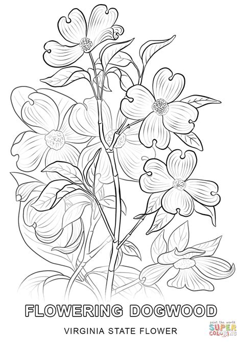 coloring page virina virginia state tree coloring page flower pages grig3 org