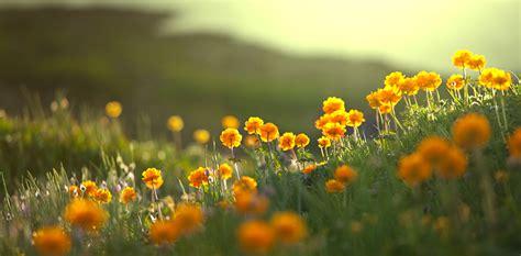 immagini paesaggi fioriti tempoverde