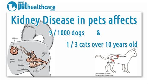 symptoms of kidney disease in dogs kidney failure in dogs symptoms sick kidney lawrenceville suwanee animal hospital