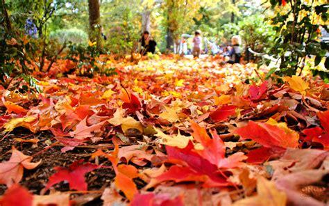 7 tips for raking leaves like a pro