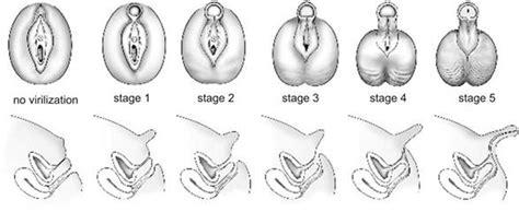pictures of the female genitalia unshaved unshaved genitalia female hairstylegalleries com