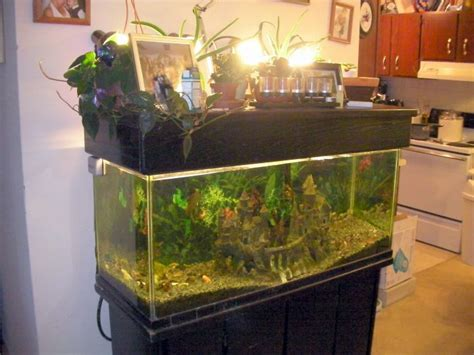 gallon fish tank aquaponics  gallon fish tank